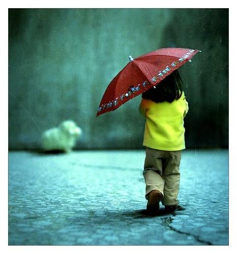 Parasols  Umbrellas : strazor.com