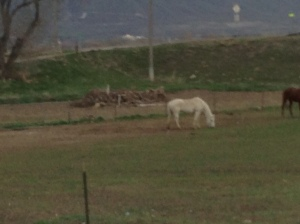 I blurred this one, but we drove by many horses.