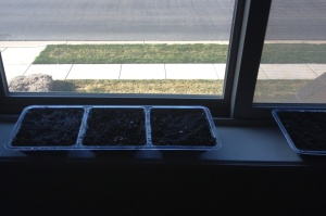 More soil, water, and a sunny window. Fingers crossed.